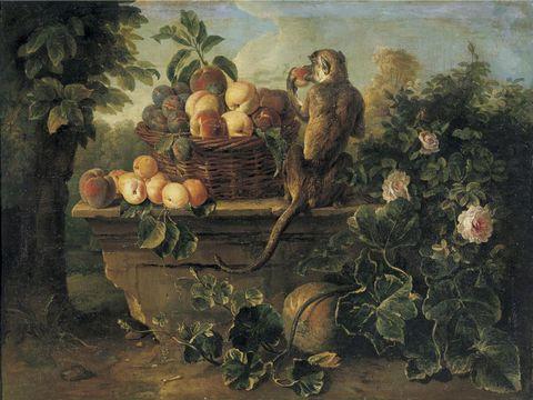 猴子和水果图片