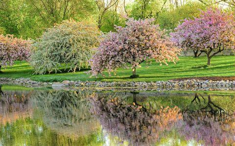 鲜花树木湖泊风景