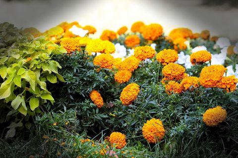 美丽鲜花风景壁纸