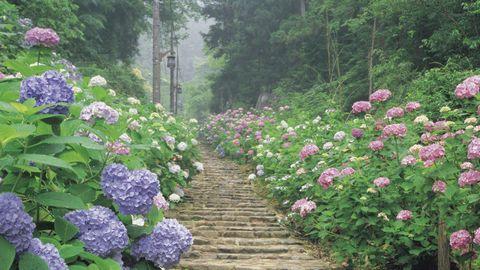 鲜花台阶道路风景