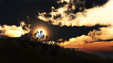 黄昏草地风景壁纸