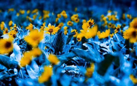 蓝色树叶鲜花壁纸