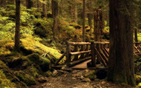 树林小桥风景壁纸