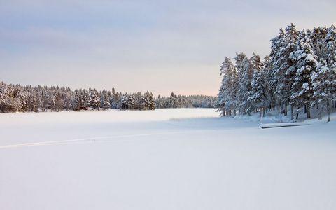 树林雪地风景壁纸