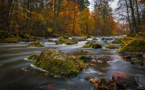 树林小河风景壁纸