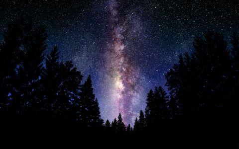 树林星空风景壁纸