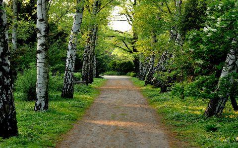 林间道路风景壁纸