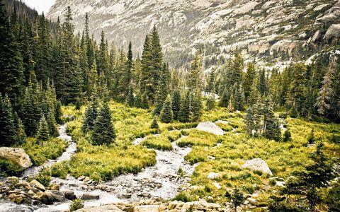 树林小溪风景壁纸