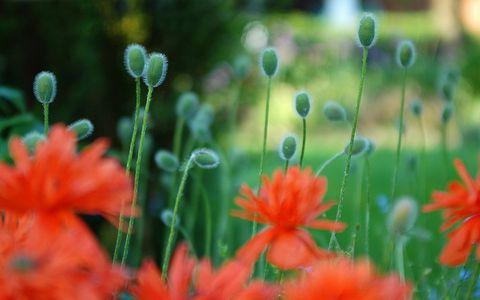 花卉植物风景壁纸