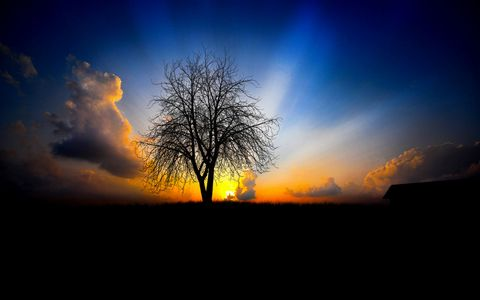 树木与夕阳风景