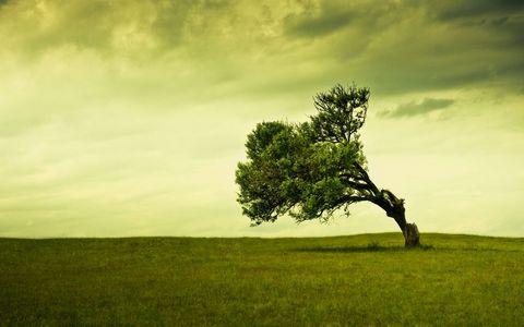 草原树木风景壁纸