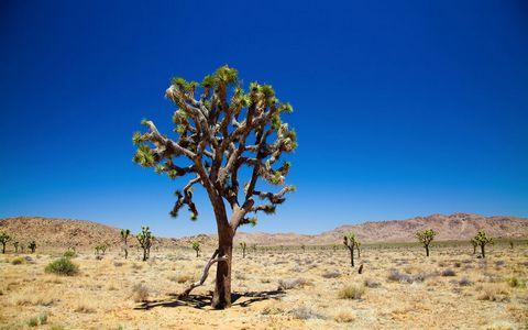 荒漠树木风景壁纸