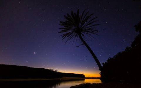 椰树星空风景壁纸
