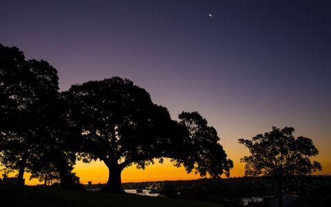 树木夜晚风景