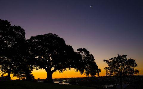 夜晚树木风景
