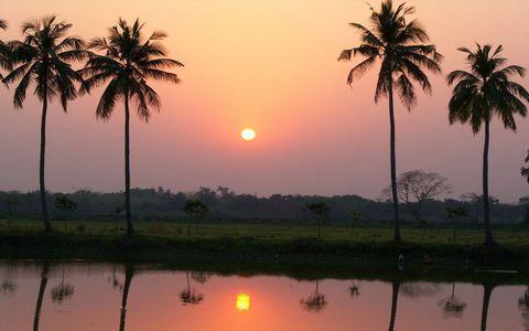 椰树夕阳风景