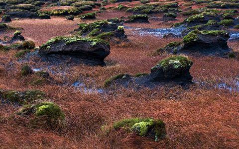 荒漠石头苔藓