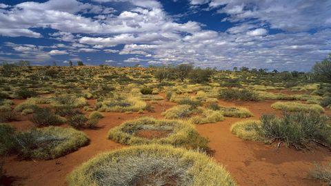 荒漠草地风景