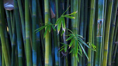 竹林风景壁纸