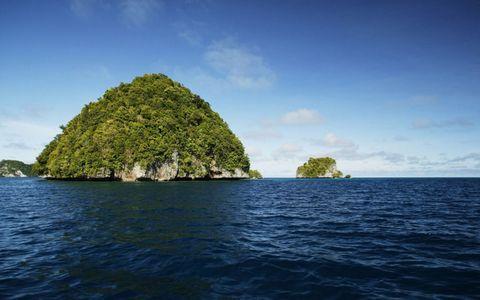 大海绿岛树林