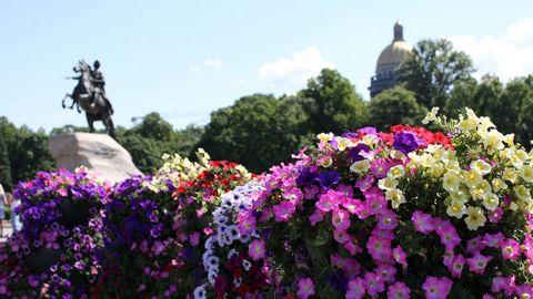 彩色花卉高清背景