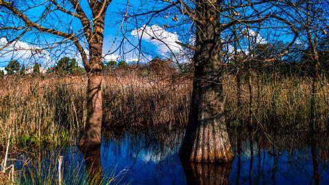 水中树木高清背景