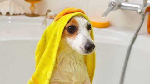 洗澡的狗狗高清背景