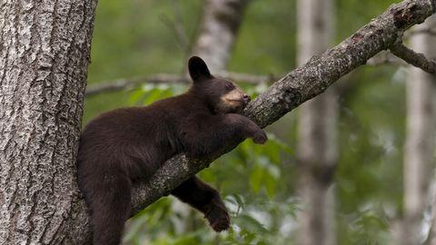 树熊高清背景