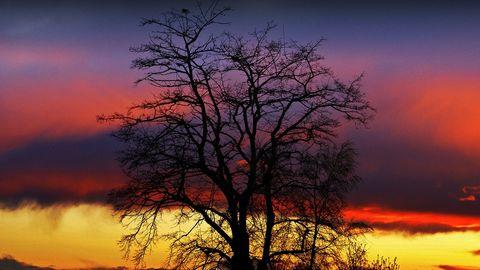 彩霞与树木美景壁纸