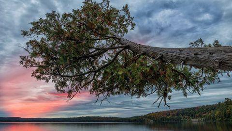 彩霞树木风景
