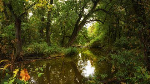 春天小河风景壁纸