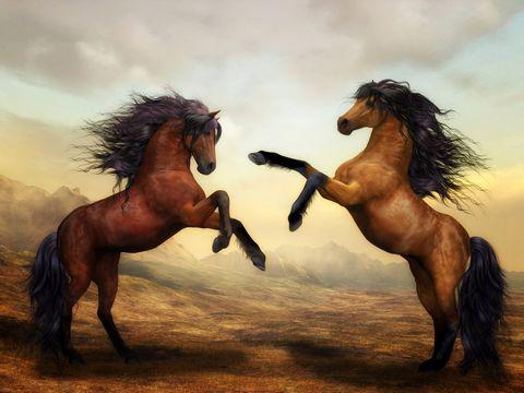 高清马匹摄影