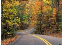 绿色树林与公路